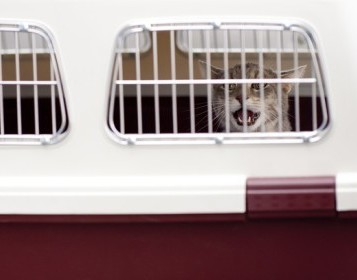 A detailed guide on #moving to #Ireland with pets. #moveabroad