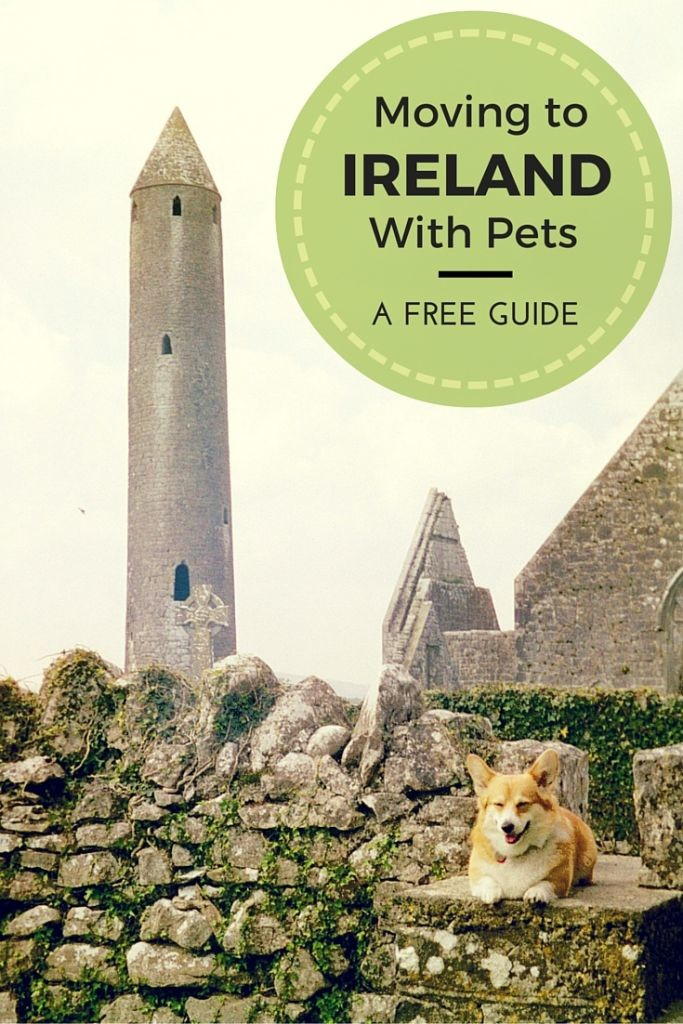 Moving Your Pets To Ireland Relocating To Ireland