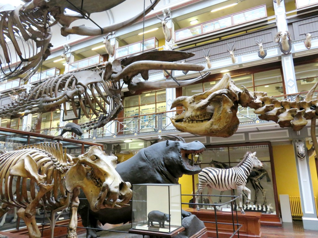 Natural History Museum Opening Times Saturday